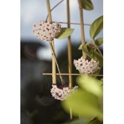 Windhager Blumenstütze 85x32cm Bambus   05725