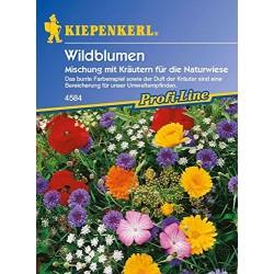 Bruno Wildbl. mit Kraeutern...