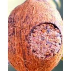 Gartenkrone Kokosnuss mit...