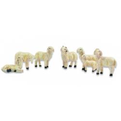 Riffelmacher Schafe sort....