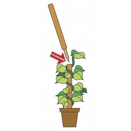 Windhager Kokos-Pflanzstäbe 110 cm verlängerb. 05663